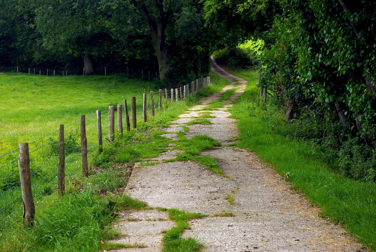 Bois de Burwash © French Moments