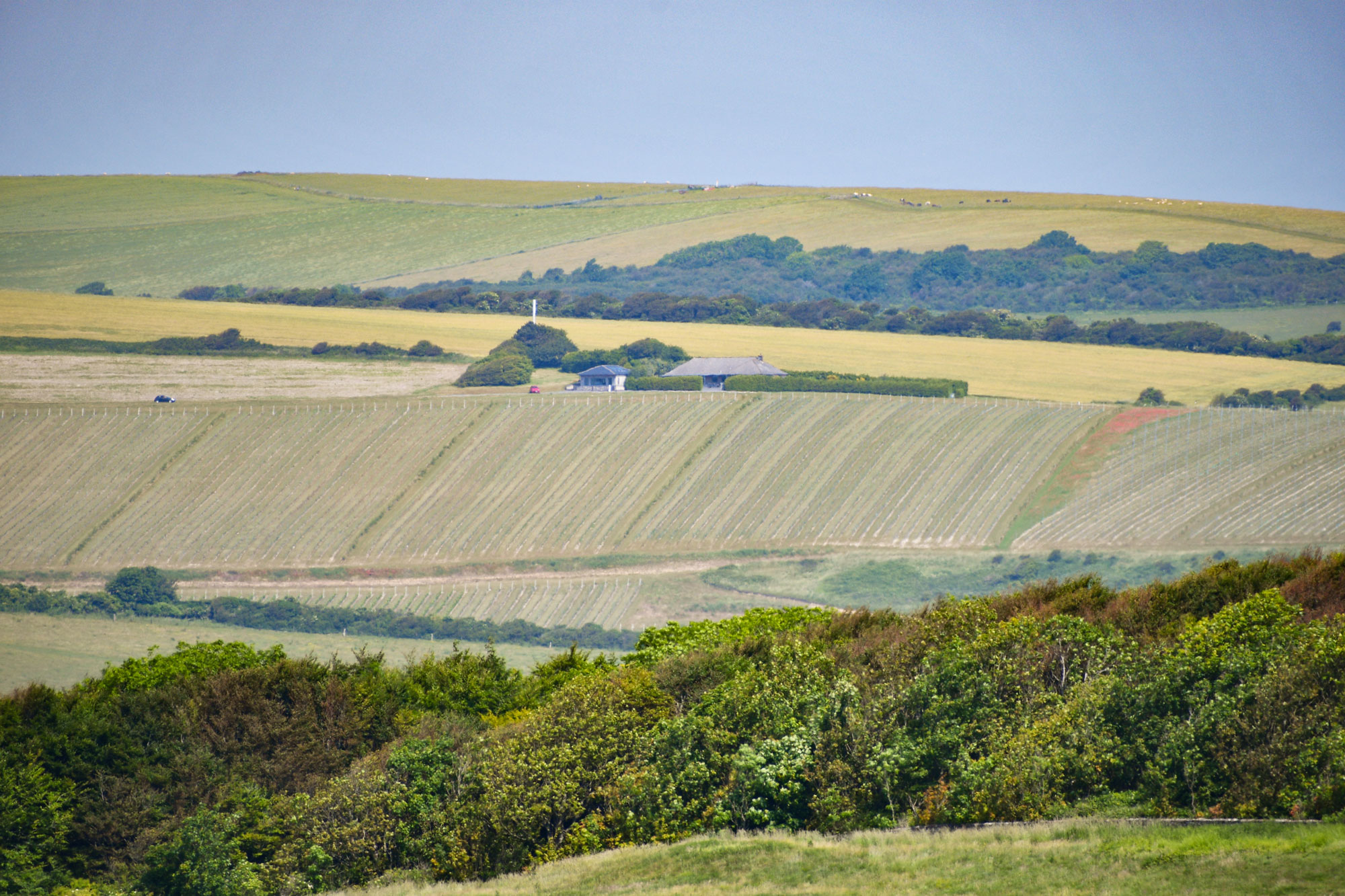 Le vignoble de Rachfinny farm © French Moments
