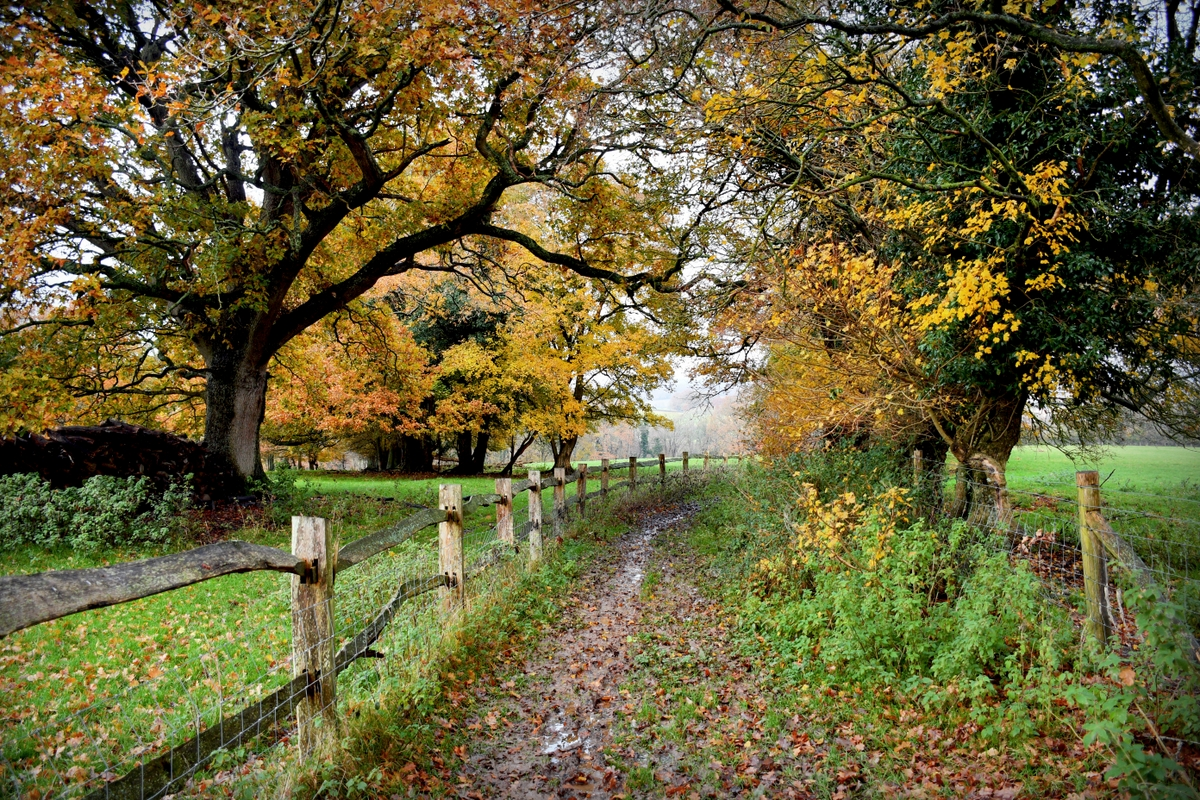 High Weald en automne © French Moments